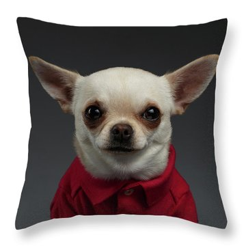 Closeup Portrait Chihuahua Dog In Stylish Clothes. Gray Background Throw Pillow