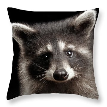 Closeup Portrait Cute Baby Raccoon Isolated On Black Background Throw Pillow