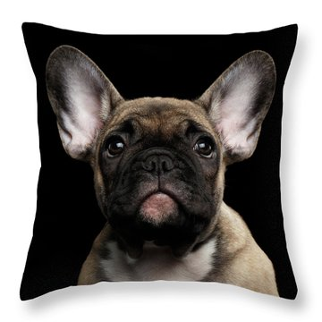 Closeup Portrait French Bulldog Puppy, Cute Looking In Camera Throw Pillow