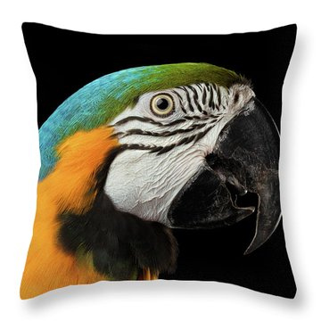 Closeup Portrait Of A Blue And Yellow Macaw Parrot Face Isolated On Black Background Throw Pillow