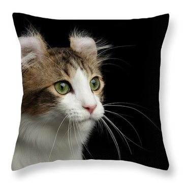 Throw Pillow featuring the photograph Closeup Portrait Of American Curl Cat On Black Isolated Background by Sergey Taran