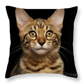 Closeup Portrait Of Bengal Kitty Isolated Black Background Throw Pillow by Sergey Taran