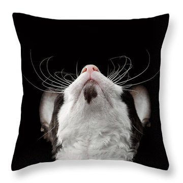 Closeup Portrait Of Cornish Rex Looking Up Isolated On Black  Throw Pillow