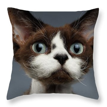 Closeup Portrait Of Devon-rex Looking In Camera On Gray  Throw Pillow