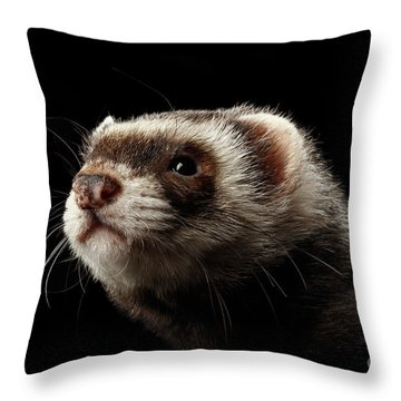 Closeup Portrait Of Funny Ferret Looking At The Camera Isolated On Black Background, Front View Throw Pillow