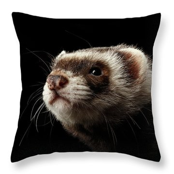 Throw Pillow featuring the photograph Closeup Portrait Of Funny Ferret Looking At The Camera Isolated On Black Background, Front View by Sergey Taran