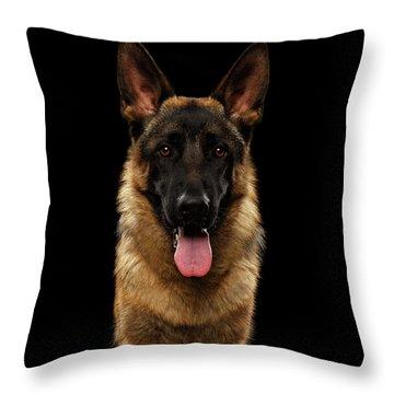 Closeup Portrait Of German Shepherd On Black  Throw Pillow by Sergey Taran