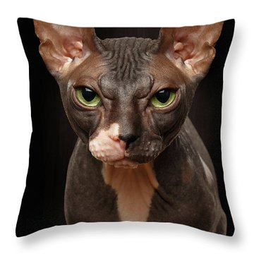 Closeup Portrait Of Grumpy Sphynx Cat Front View On Black  Throw Pillow