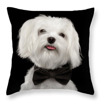 Closeup Portrait Of Happy White Maltese Dog With Bow Looking In Camera Isolated On Black Background Throw Pillow