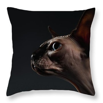 Throw Pillow featuring the photograph Closeup Portrait Of Sphynx Cat In Profile View On Black  by Sergey Taran
