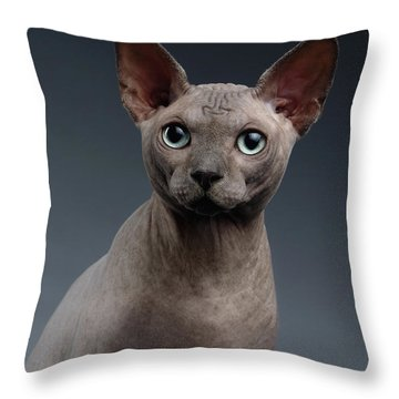 Closeup Portrait Of Sphynx Cat Looking In Camera On Dark  Throw Pillow