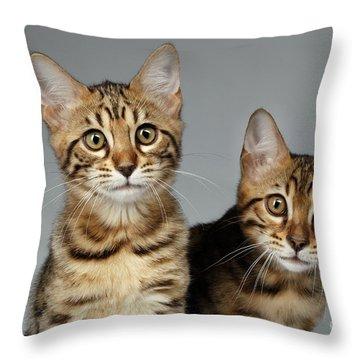 Closeup Portrait Of Two Bengal Kitten On White Background Throw Pillow by Sergey Taran