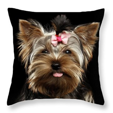 Closeup Portrait Of Yorkshire Terrier Dog On Black Background Throw Pillow