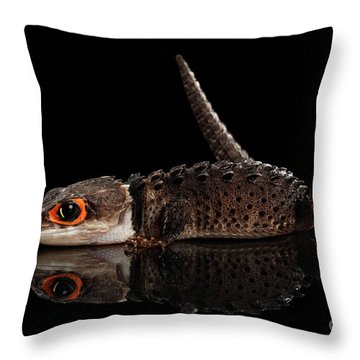 Closeup Red-eyed Crocodile Skink, Tribolonotus Gracilis, Isolated On Black Background Throw Pillow