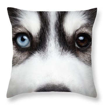 Closeup Siberian Husky Puppy Different Eyes Throw Pillow