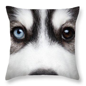 Closeup Siberian Husky Puppy Different Eyes Throw Pillow by Sergey Taran