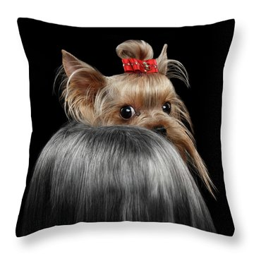 Closeup Yorkshire Terrier Dog, Long Groomed Hair Pity Looking Back Throw Pillow