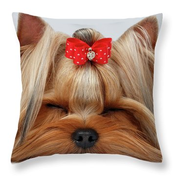 Closeup Yorkshire Terrier Dog With Closed Eyes Lying On White  Throw Pillow