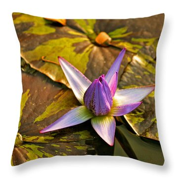 Closing For The Night Throw Pillow