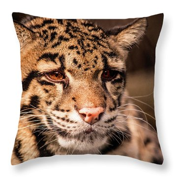 Clouded Leopard II Throw Pillow