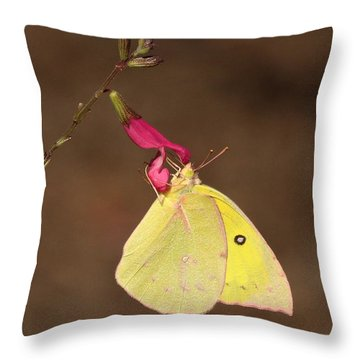 Clouded Sulphur Butterfly On Pink Wildflower Throw Pillow