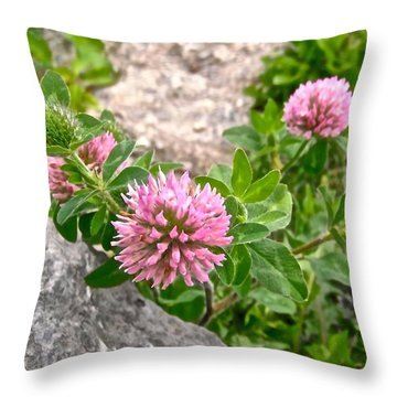 Clover On The Rocks Throw Pillow by Stephanie Moore