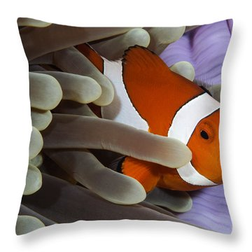 Clown Anemonefish, Indonesia Throw Pillow by Todd Winner
