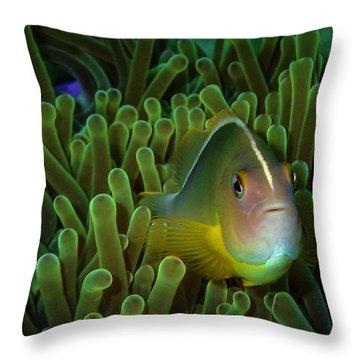 Clownfish Close Up Throw Pillow