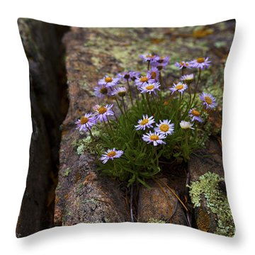 Clump Of Asters Throw Pillow