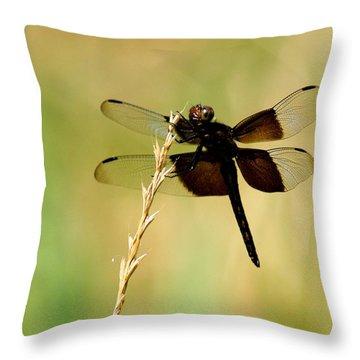 Coal Black Dragonfly Throw Pillow