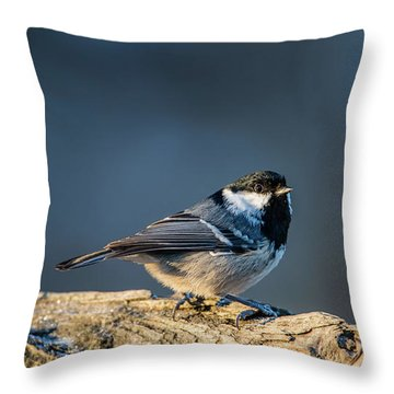 Throw Pillow featuring the photograph Coal Tit's Colors by Torbjorn Swenelius