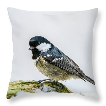 Throw Pillow featuring the photograph Coal Tit's Profile by Torbjorn Swenelius