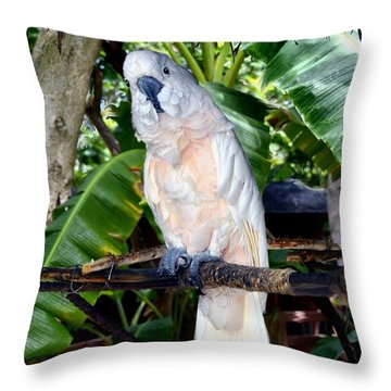Cockatoo On Perch Throw Pillow