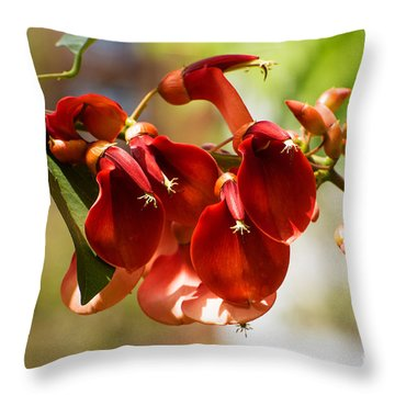 Cockspur Coral Tree Flowers Throw Pillow by MaryJane Armstrong
