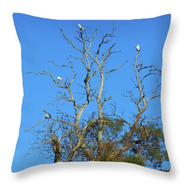 Throw Pillow featuring the photograph Cocky Tree  by Mark Blauhoefer