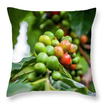 Coffee Plant Throw Pillow