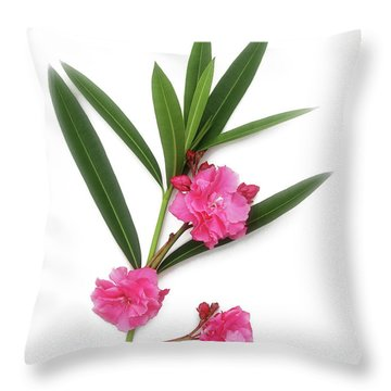 Cog  Nerium Oleander Splendens Giganteum Throw Pillow