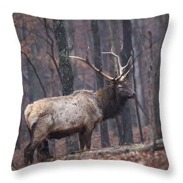 Throw Pillow featuring the photograph Chilly Misty Morning by Andrea Silies