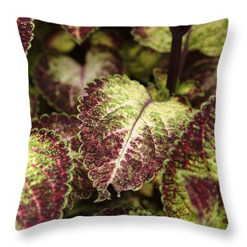 Coleus Plant Throw Pillow by Erin Paul Donovan