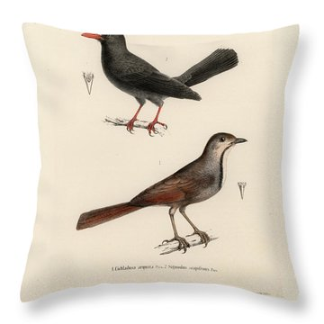 Throw Pillow featuring the drawing Collared Palm Thrush And Chestnut-fronted Helmetshrike by J D L Franz Wagner