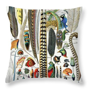 Collection Of Different Plume Types Throw Pillow