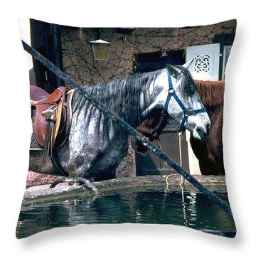 Colmar II Throw Pillow