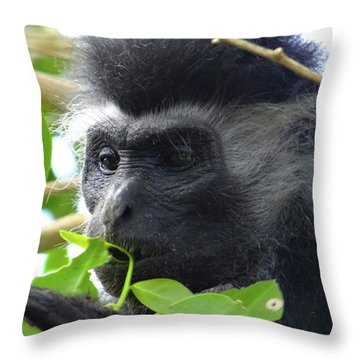 Colobus Monkey Eating Leaves In A Tree Close Up Throw Pillow