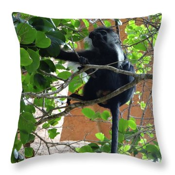 Colobus Monkey Eating Leaves In A Tree - Full Body Throw Pillow