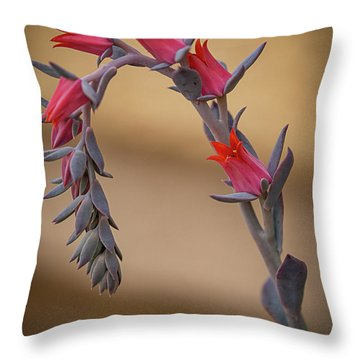 Color And Curve Throw Pillow