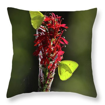Throw Pillow featuring the photograph Color On Citico by Douglas Stucky