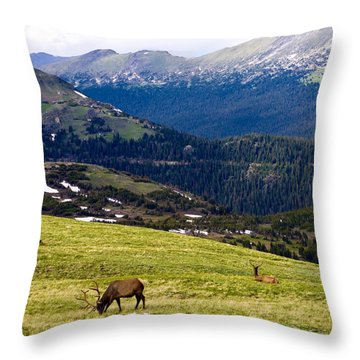 Colorado Elk Throw Pillow