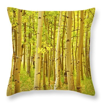 Colorado Fall Foliage Aspen Landscape Throw Pillow by James BO  Insogna