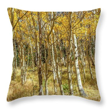 Colorado Gold Throw Pillow