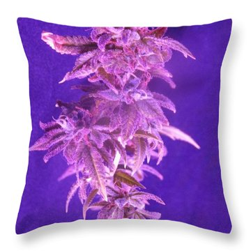 Colorado Rocksy Throw Pillow